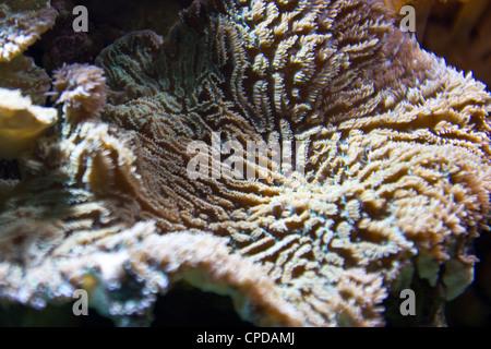 Koralle - Stockfoto