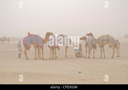 Kamele Racing in einem Sandsturm mit ihren Reitern - Stockfoto