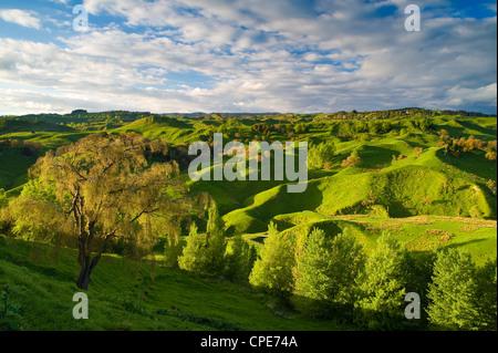 Ackerland in der Nähe von Taihape, North Island, Neuseeland, Pazifik - Stockfoto