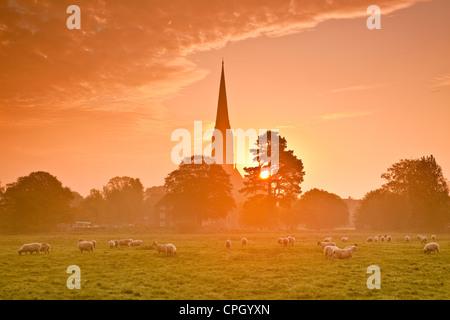 Eine schöne Morgendämmerung auf den Strandwiesen wobei Salisbury Kathedrale beleuchtet. Die Schafbeweidung glücklich - Stockfoto