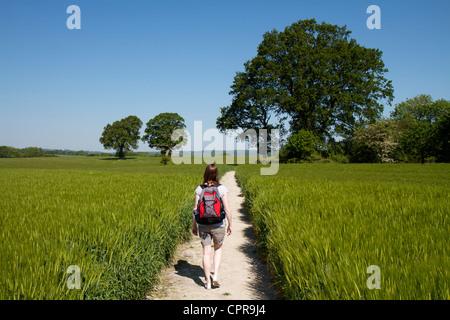 Junge Frau zu Fuß durch eine Ernte von Gerste auf einem Kreide-Pfad in der Nähe von Buriton auf den South Downs - Stockfoto