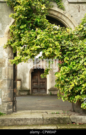 Englisch Efeu, gemeinsame Efeu (Hedera Helix) wächst über Kirchhof Bogen, London, UK Stockfoto