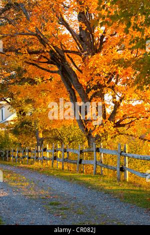 Bäume, Kies Weg und Zaun im Herbst, Lawrenceville, Quebec, Kanada - Stockfoto