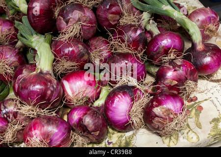 Rote Zwiebeln mit Stiel auf lokalen Farmers Market - Stockton, Kalifornien USA - Stockfoto
