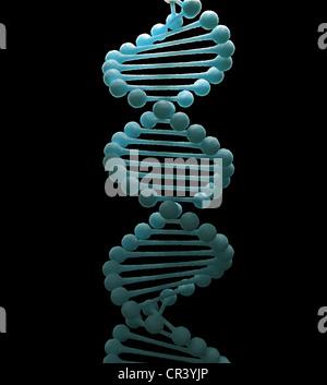 Vereinfachte DNA-Doppelhelix Strang Modell - Stockfoto