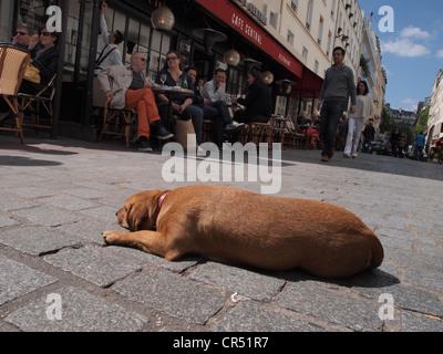 Hund-Nickerchen in der Sonne, während ihre Besitzer im nahe gelegenen Bistro auf Rue Cler in Paris, Frankreich, - Stockfoto