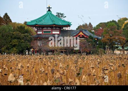 Japan, Insel Honshu, Tokyo, der Ueno-Park, der Benten tun Tempel - Stockfoto