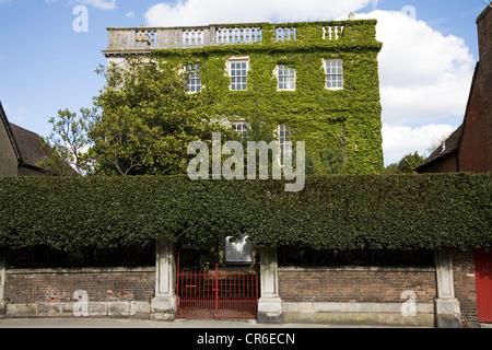 Ivy – angenommen, wildem Wein / Japanisch Schlingpflanze / Boston-Efeu – Wachstum in einem schönen Haus in Wareham, - Stockfoto