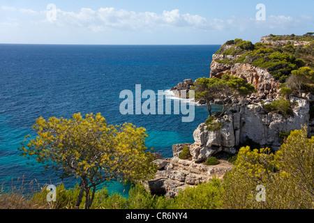 Pinien an der felsigen Küste in der Nähe von Cala de S'Almonia, Cap de ses Salines Natur Reservat, Cala Llombards, - Stockfoto