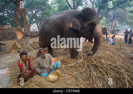 Elefanten zu verkaufen, mit seinen Mahout im Haathi Basar, Sonepur Mela, Sonepur, Bihar, Indien - Stockfoto