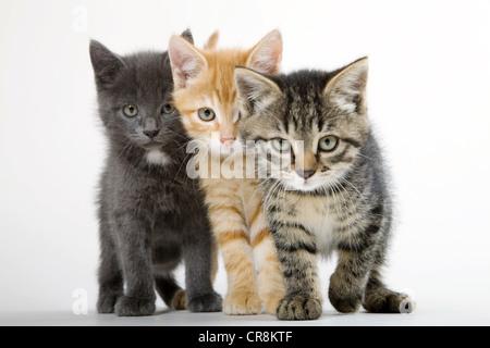 Drei Kätzchen nebeneinander - Stockfoto