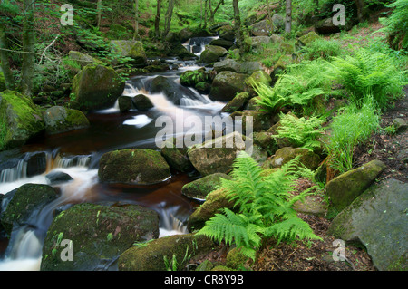 UK, Derbyshire, Peak District, Burbage Bach fließt durch Padley Schlucht - Stockfoto