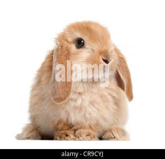 Kaninchen vor weißem Hintergrund - Stockfoto
