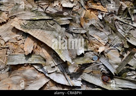 """Detail der verwitterten Composite """"Spanplatten"""" zu schließen. - Stockfoto"""