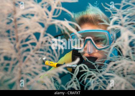 Scuba Diver Blick durch große förmigen Baum-schwarzen Korallen (Antipathes SP.), Lingganay, Leyte, Philippinen, - Stockfoto