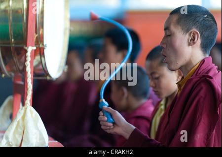 Mönche im Gebet, Tawang Khinmey Nyingma Kloster in der Nähe von Tawang, Arunachal Pradesh, Indien, Asien - Stockfoto
