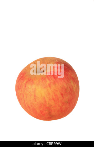 malus domestica apfel apfel stockfoto bild 62787485 alamy. Black Bedroom Furniture Sets. Home Design Ideas