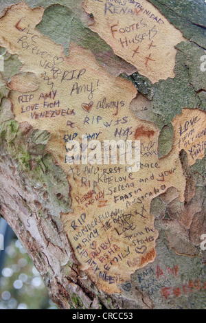Hommagen an die verstorbenen Sängerin Amy Winehouse auf der Rinde der Platane gegenüber ihrem ehemaligen Haus in - Stockfoto