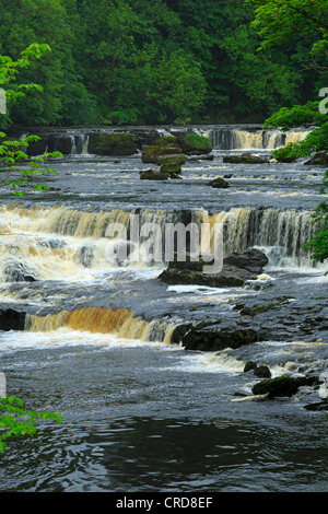 Aysgarth Falls, Wensleydale, Yorkshire. Die obere fällt auf den Fluß Ure. - Stockfoto