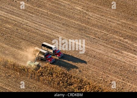 Luftaufnahme, Agrarlandschaft im Central Valley, Erntemaschinen Maisernte, Fresno, Kalifornien, USA - Stockfoto