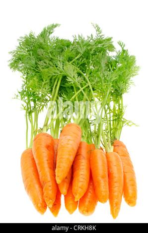 Frische Karotten mit grünen Stielen, geringe Schärfentiefe - Studio gedreht mit weißem Hintergrund - Stockfoto