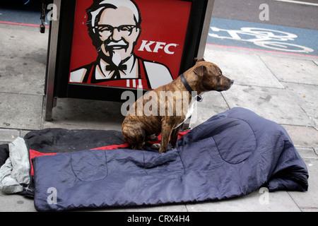 Staffordshire Bullterrier wartet auf die Rückkehr des Besitzers obdachlos - Stockfoto