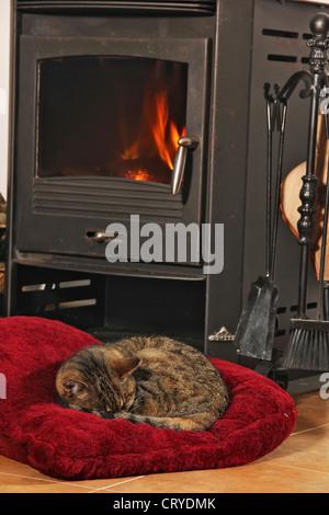 Hauskatze schlafen gewellt bis roten Kissen vorne Herd - Stockfoto