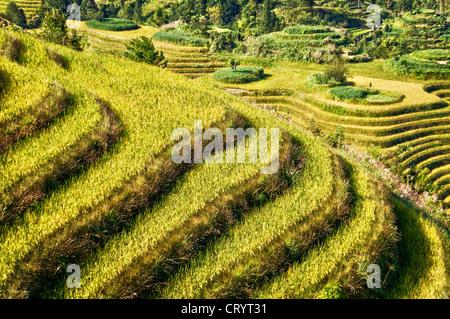 Longji Terrassen Reisfelder in der Nähe von Guilin, Guangxi - China - Stockfoto