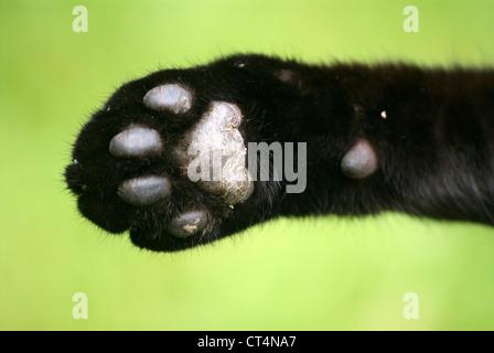 CAT PAW - Stockfoto