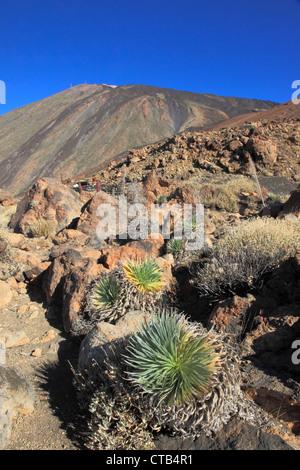 Spanien, Kanarische Inseln, Teneriffa, Pico del Teide, Vulkan, Parque Nacional del Teide, - Stockfoto