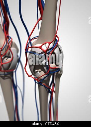 Menschliche Anatomie Kunstwerk - Stockfoto