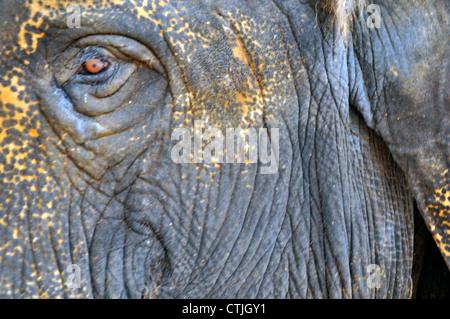 Elefanten hautnah Auge - Stockfoto
