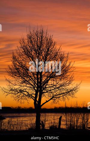 Ein einzelner Baum im Winter mit Orange glühenden Himmel bei Sonnenaufgang mit den gefrorenen See Spiegelung das - Stockfoto