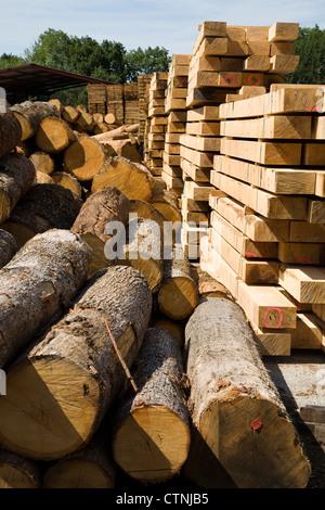 Haufen von Baumstämmen / Protokollierung / Stämme / Stamm Protokoll vor der Schnittware Planken / Holz gestapelt - Stockfoto