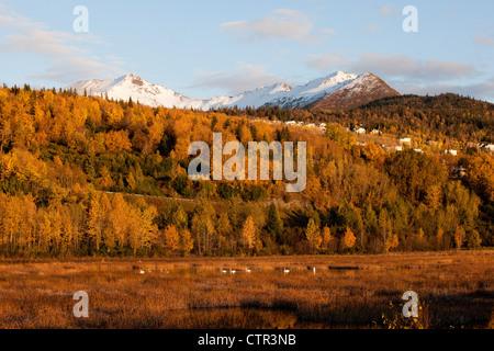 Ansicht der Chugach Mountains, Anchorage Hang und Trumpeter Schwäne im Potter Marsh, Yunan Alaska, Herbst - Stockfoto