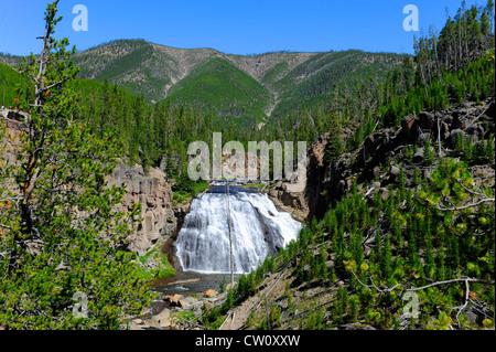 Wyoming Gibbon Falls Yellowstone Nationalpark, WY - Stockfoto
