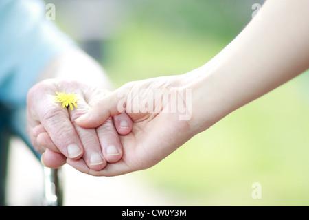 Junge und ältere Hände Hand in Hand mit einem Löwenzahn - Stockfoto