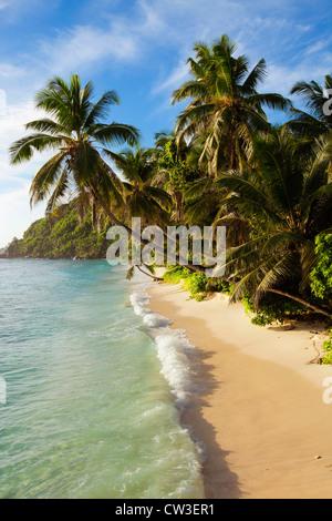strand und palmen b ume vor blue water hotel wadduwa sri lanka stockfoto bild 60502149 alamy. Black Bedroom Furniture Sets. Home Design Ideas