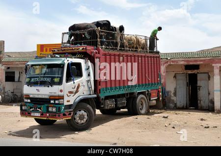 Transport von Tieren mit Rinder und Schafe auf der Oberseite, Marokko - Stockfoto