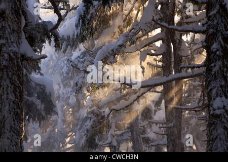 Von der Lost Lake Trail im Winter, Chugach National Forest, Alaska. - Stockfoto