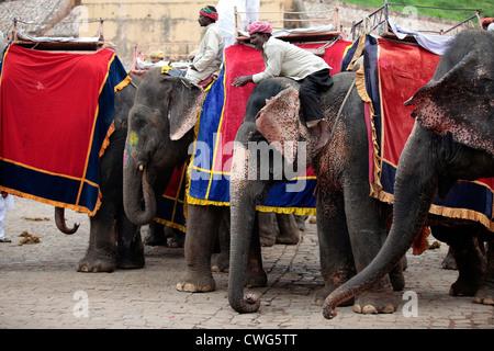 Elefanten und Mahouts auf Amber Fort - Stockfoto
