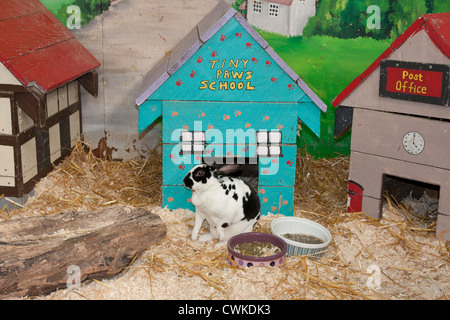 Kaninchen in Anzeigen von Stift, Fischer Park Farm, Sussex, England - Stockfoto