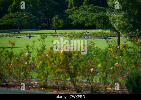 Neue Farm Park, Brisbane Queensland Australien - Stockfoto