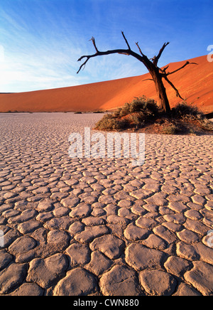 Anjous Erioloba, Camel Thorn, toter Baum neben roten Sanddüne und trockene rissige Erde in Deadvlei Ton Pfanne in - Stockfoto
