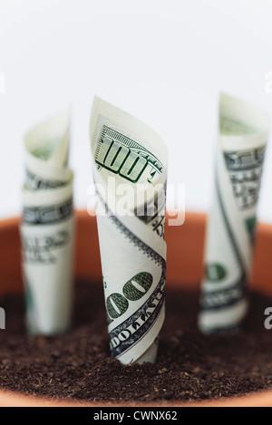 Hundert - Dollar-Scheine im Blumentopf gepflanzt - Stockfoto