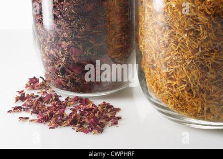 Calendula Officinalis, Ringelblume - Stockfoto