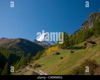 Bäume wachsen auf ländlichen Hügel - Stockfoto