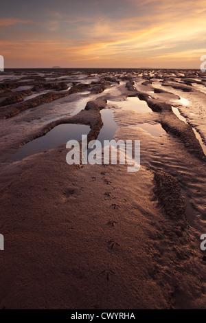 Fußabdrücke von Watvögeln im Wattenmeer in Sand-Bucht in der Nähe von Weston-super-Mare. Somerset. England. VEREINIGTES - Stockfoto