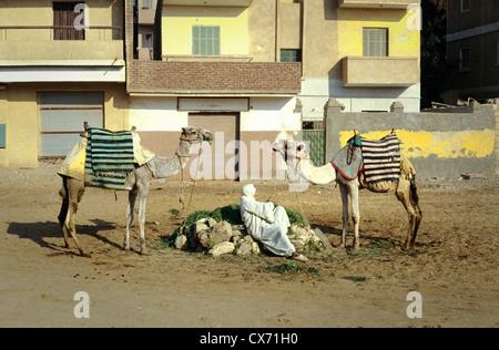 Beduinenstämme mit zwei Kamelen spiegeln einander in Kairo, Ägypten, in der Nähe der Pyramiden. - Stockfoto