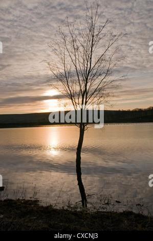 Kleinen nackten Baum stehend & Im Wasser spiegelt, bei Sonnenuntergang gegen die drastischen Golden Sky Silhouette - Stockfoto